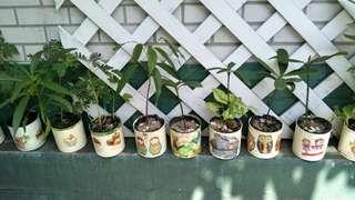 手作種子盆栽