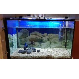 clyster clear 90x60x45 Fish Tank