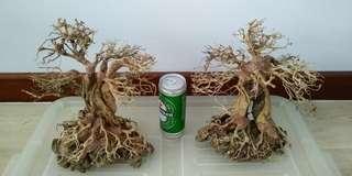 🚚 Bonsai tree