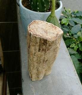 🚚 天然原皮柱狀拋亮彩色木化玉擺件/100%純天然彩色木化石樹皮保留完整,上下切平拋亮,珍藏品,重約570公克,出清只有一件