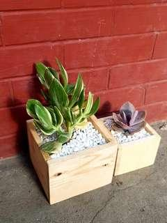 Wood pot or planter
