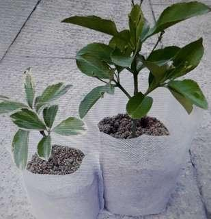 Seedling Pots - 20pcs Biodegradable