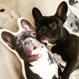 TURN YOUR PET INTO A CUSHION!! Send us a photo now!!