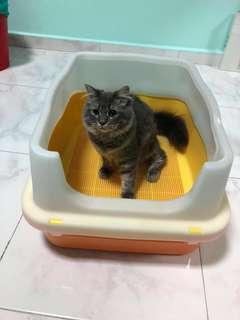 Cat Litter Box *CAT NOT FOR SALE*