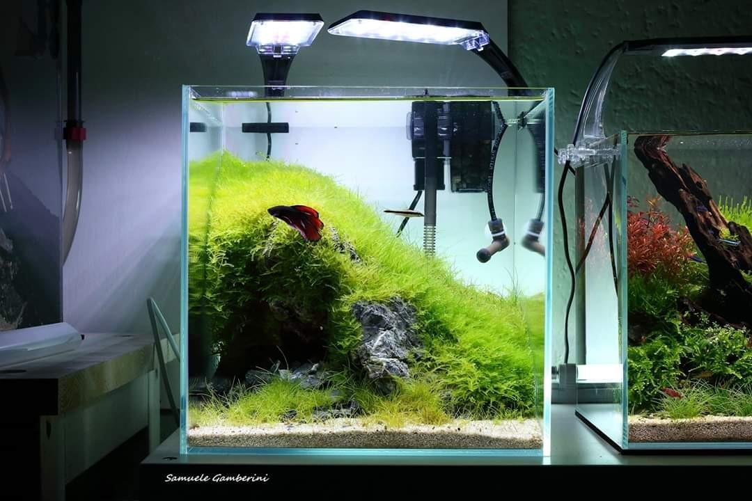30cm - 40cm Aquascape Betta/Shrimp Crystal Tank, Pet ...