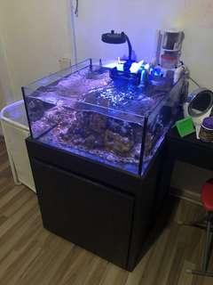 2ft cube tank with cabinet, sump and accessories