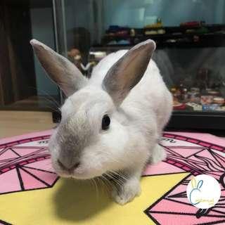 Rabbit Boarding Staycation