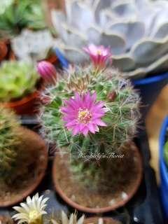 Cactus flowers bloom