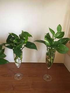 Decorating yr office or home with plants without soil