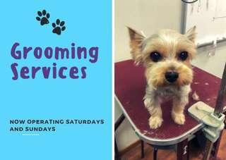 🚚 (Cheapest!) Dog grooming services with transport