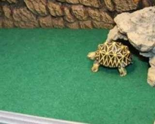 Cage carpet for pets