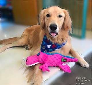🚚 BN LARGE GoDog Gators Chew Guard Dog Toy, Pink,