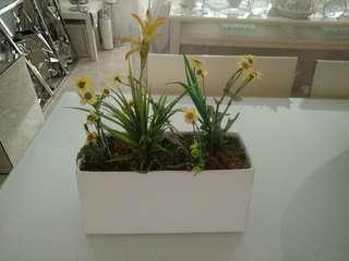 Yellow flowers + white pot
