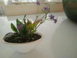 🚚 Purple flowers + white pot