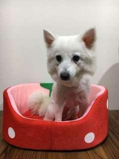 🚚 草莓狗窩寵物床