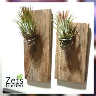 WALL MOUNTED AIR PLANT HOLDER