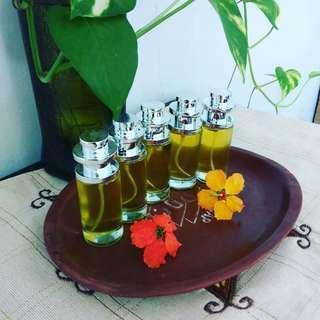 moringa minyak kelor biji daun