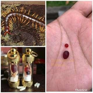 4D Wealth Luck King Centipede Pearl Geliga Lipan