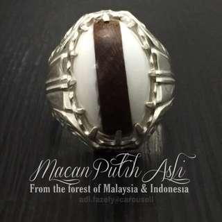 (Sold) #1 Piece Only   Exclusive : 2 Kinds of Macan Putih (Originate from Malaysia & Indonesia respectively)