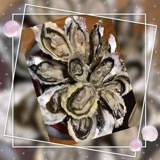 🇯🇵鳥羽三重縣浦村牡蠣🇯🇵