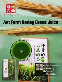 Barley Grass Green Juice - 100% Natural