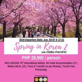 5D4N Spring in Korea via Cebu Pacific