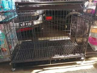Foldable Dog Cage with wheels and plastic matting