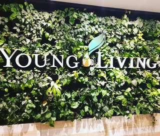 Young Living Essential Oil (Wholesales Price)