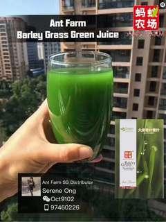 Detox - Barley Grass Green Juice (100% Natural)