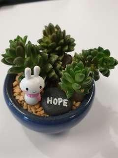 🚚 Rose succulent with bunny