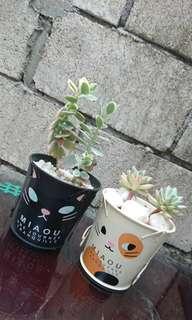 母親節-貓奴多肉植物組合 Succulent for Cats' Lovers or Mama