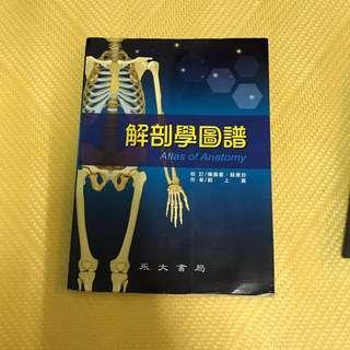 解剖學圖譜