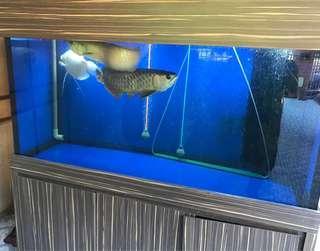 Fish Tank 5 x 2.5 x 2 includes Sum Tank Cabinet Full Set