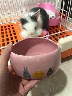 Pet Bowl rabbit bowl