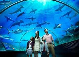 Sea Aquarium sea sea Aquarium SEA sea Sea aquarium