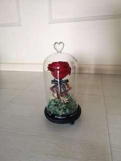 Preserved Rose in a Jar with LED light