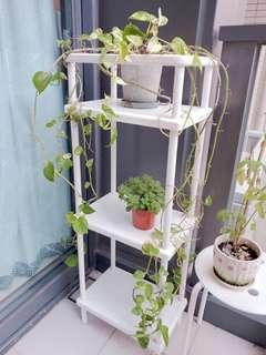 三層架/植物架/露台三層架
