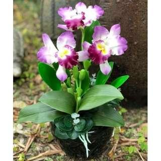 Artificial Cattleya Orchid