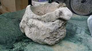 🚚 珊瑚花盆