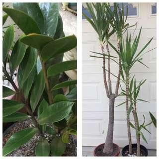 Tall-small outdoor and indoor Plants