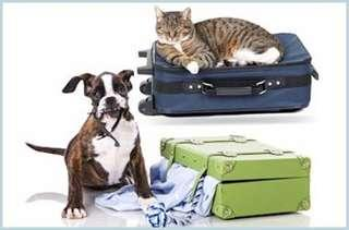 🚚 Pets day care and boarding services