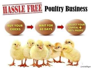 Invest Wait Earn Poultry biz