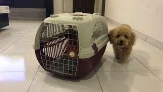 [10/10 CONDITION] Dog/Pet Carrier