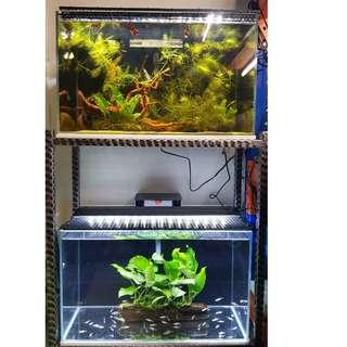 Complete Set 2FT By 1FT Fish Tank