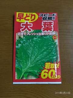 日本青紫蘇種子/園藝/盆栽/有機