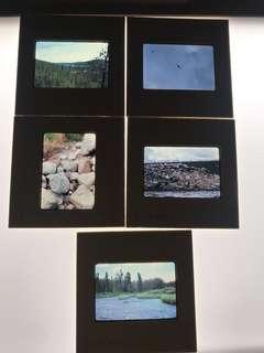 幻燈片 ektachrome kodak slides 美國 74 年 鳥 河 樹林