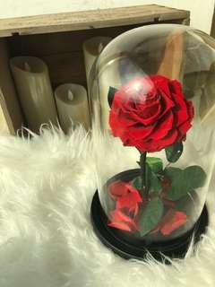 🚚 Preserved Rose in glass dome