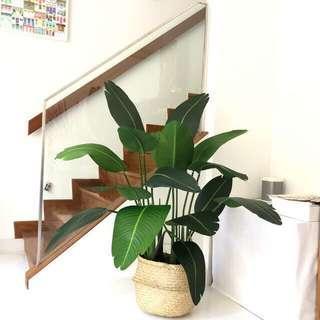 Artificial traveler plant ( in stock item)1 plant $88