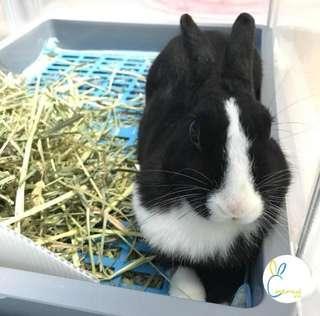 Rabbit Holiday Boarding Inn