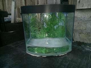 Aquarium curve 1 feet